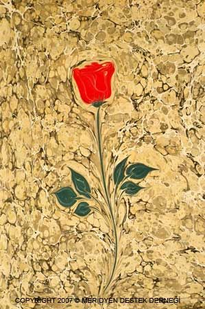 Эбру | роза